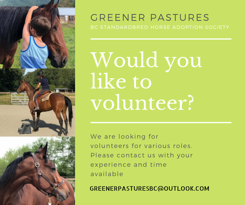 GREENER PASTURES BC Standardbred horse adoption society